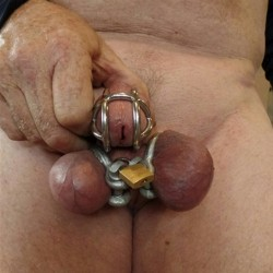 Anillas de inmovilización para testículos - Anillas del infierno
